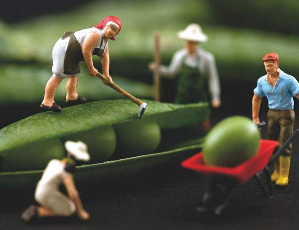Cómo triunfar con una empresa del sector agroalimentario - Emprendedores.es
