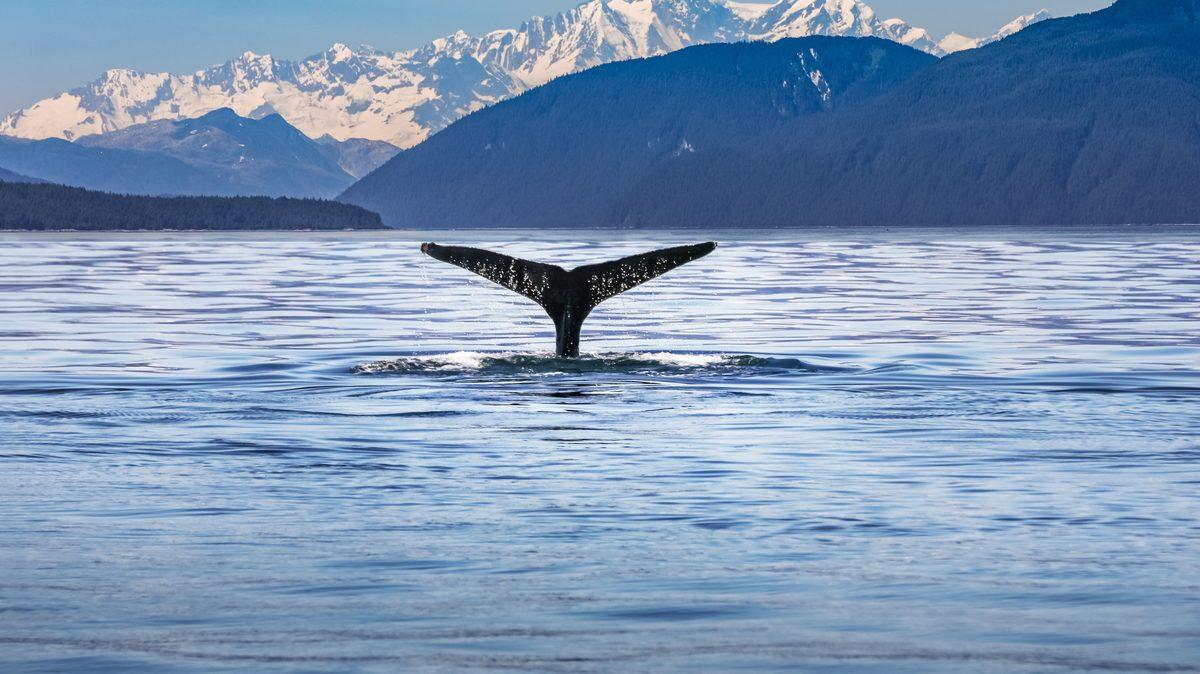 El fondo del mar, nuevo oportunidad en el mercado del lujo